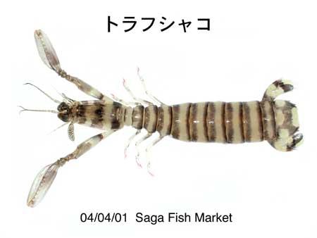 Torafu-shako.jpg