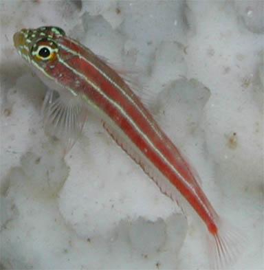 coralfish.JPG