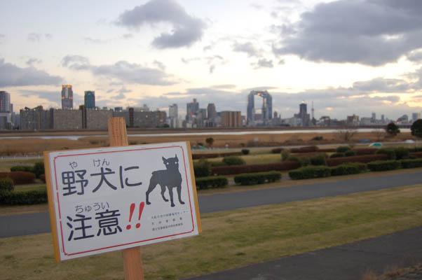 goodweatheryodogawa02.jpg