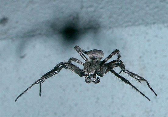 hairy_spider.JPG