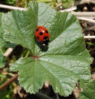ladybug_at_school.JPG