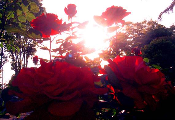 rosepentacle.jpg