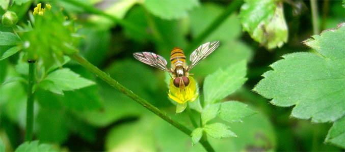 tinybee.jpg
