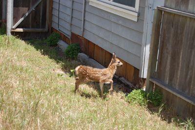 bambi02.jpg