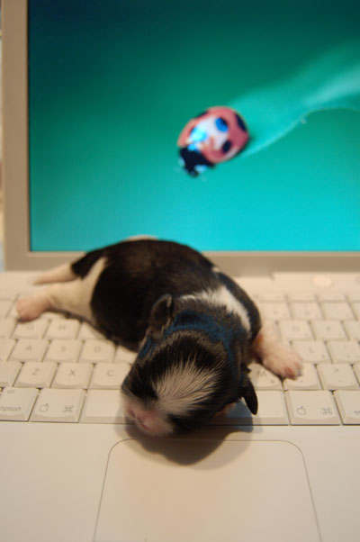 i-puppy02.jpg