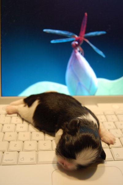 i-puppy04.jpg