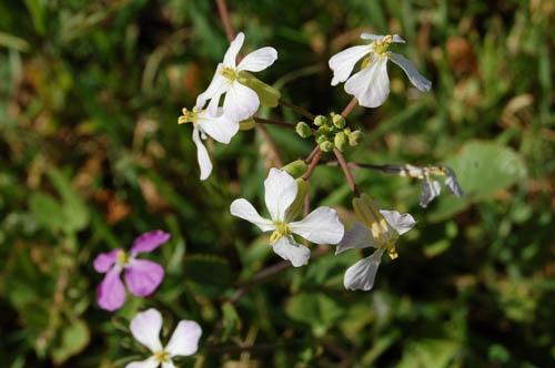 springflowers04.JPG