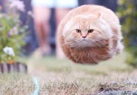 cat_missle.jpg