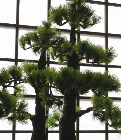 bonsai-silhouette.jpg