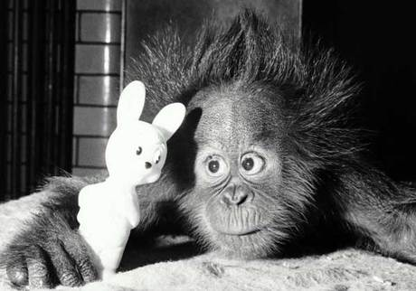 funny_bunny.jpg