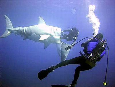 sharkcostume.jpg